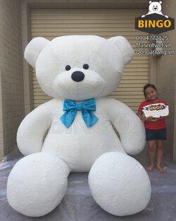 Gau_Bong_Teddy_Big Size_Trung_Bay_Bingo_costumes.JPG