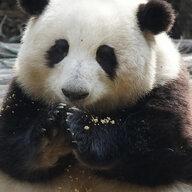 Shanny Trinh