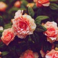 Kính vạn hoa
