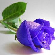 Rose_My Love