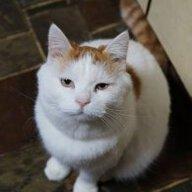 cat0705