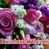 Dienhoa360