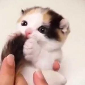 Sao lại có chú Mèo cute như thế này nhỉ!!!yêu quá!!!